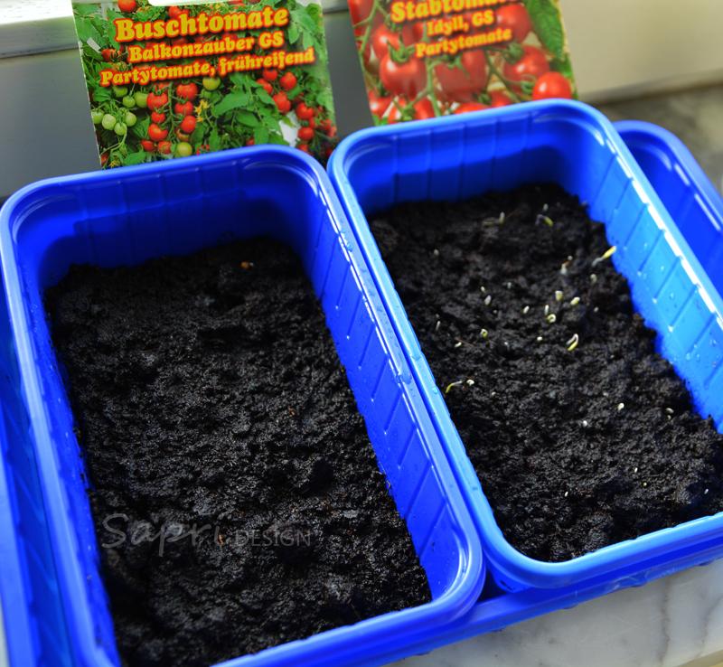 tomaten-säen-saat-balkon-sapri-design-selbstversorger-garten-obst-gemüse-anpflanzen-umtopfen-20